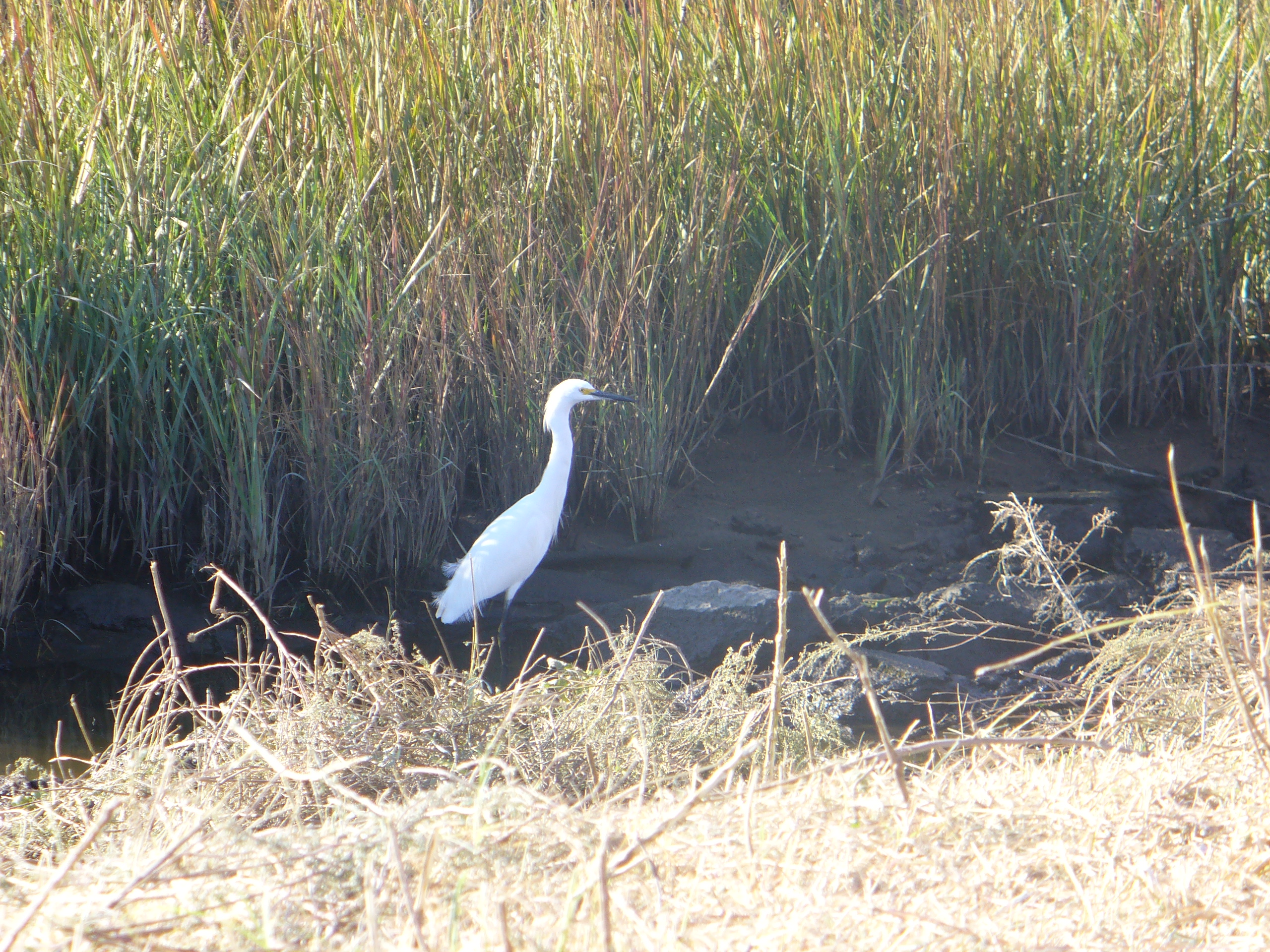 Explore Galveston Wildlife with Birding 201