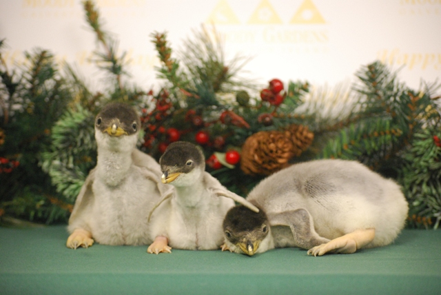 Name the Baby Penguin Contest!