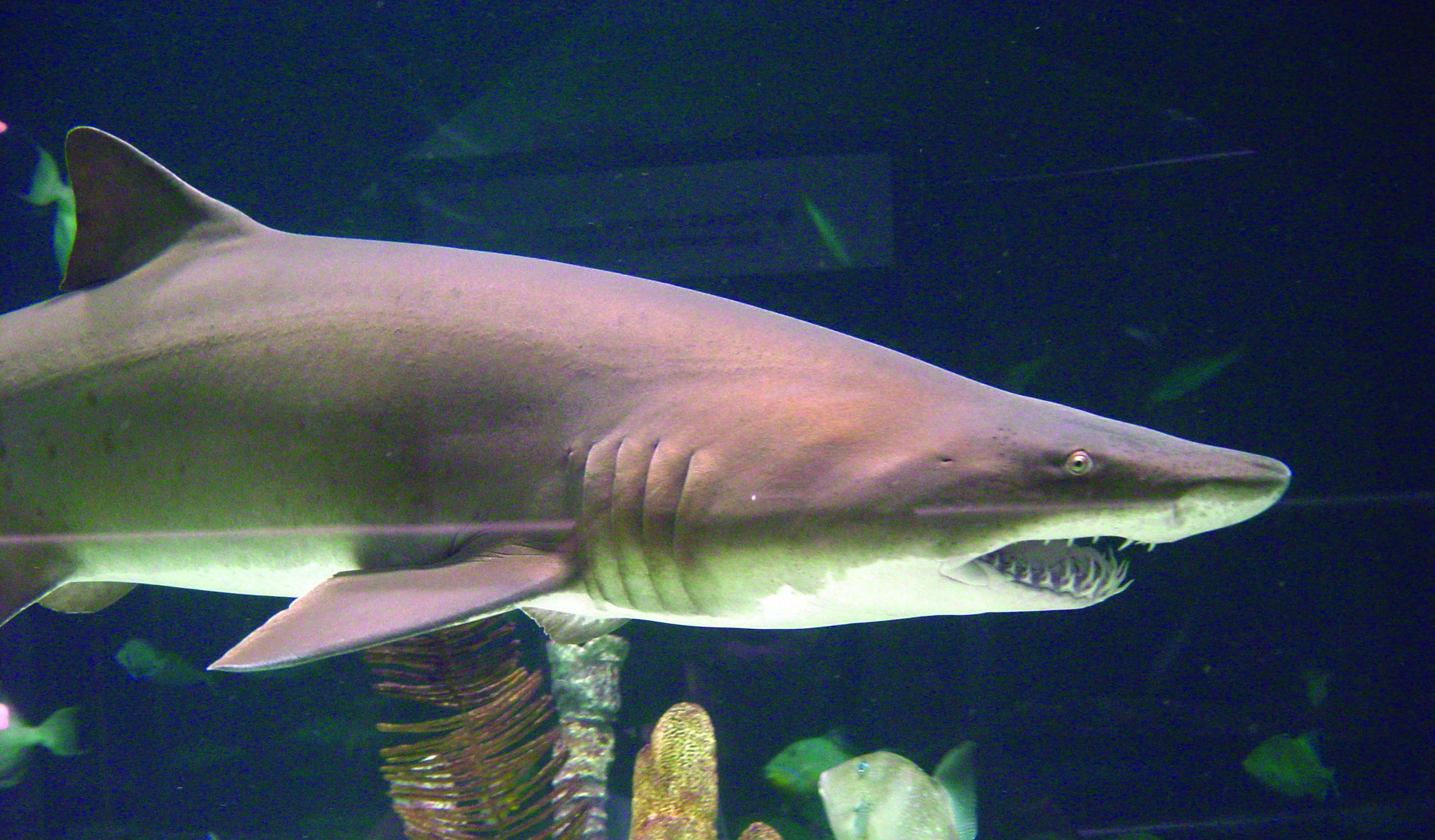 Sharks: Fact vs. Fiction – Moody Gardens  Sharks: Fact vs...