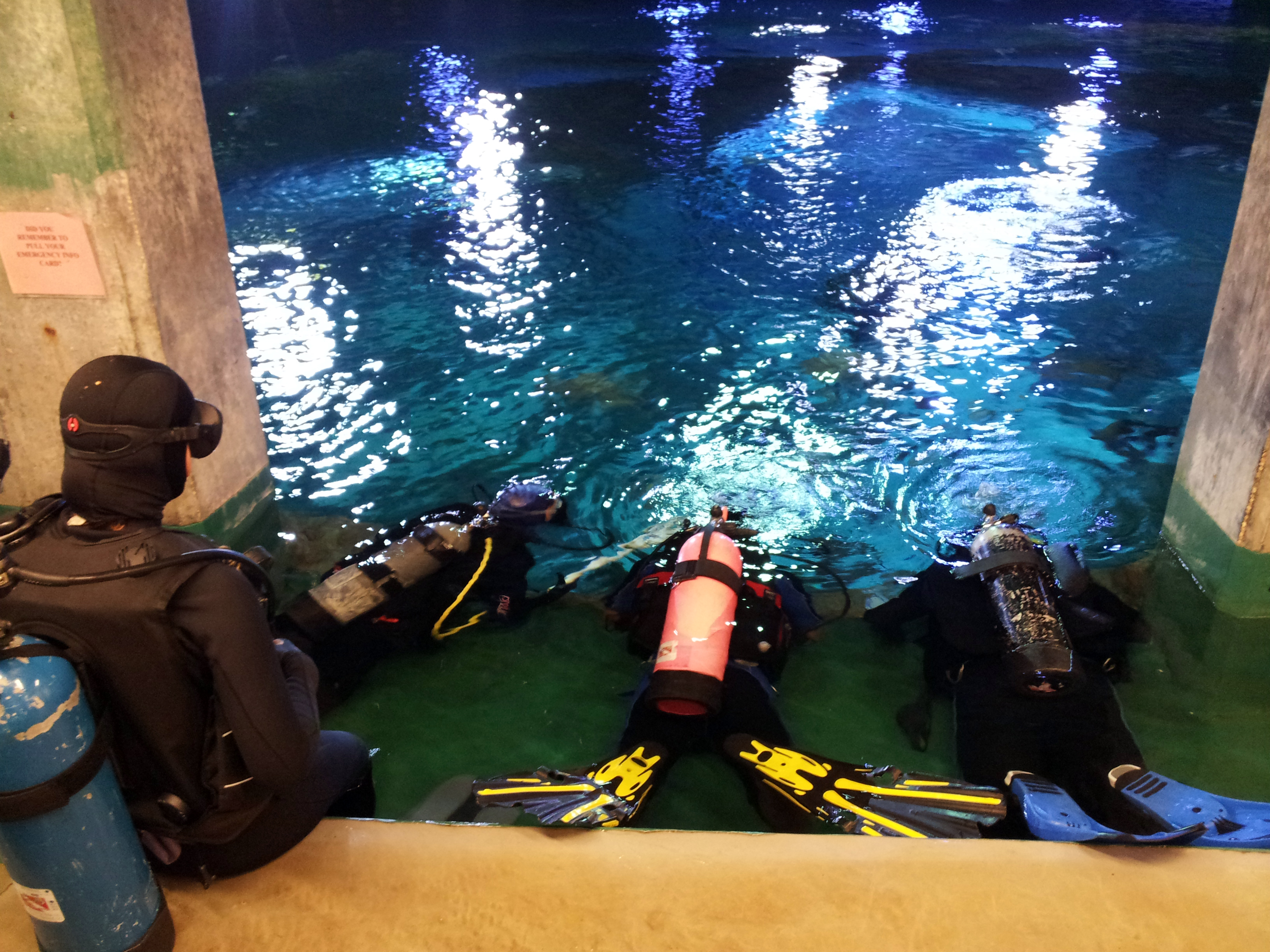 Nabs Youth Group Dives Into Action Moody Gardens