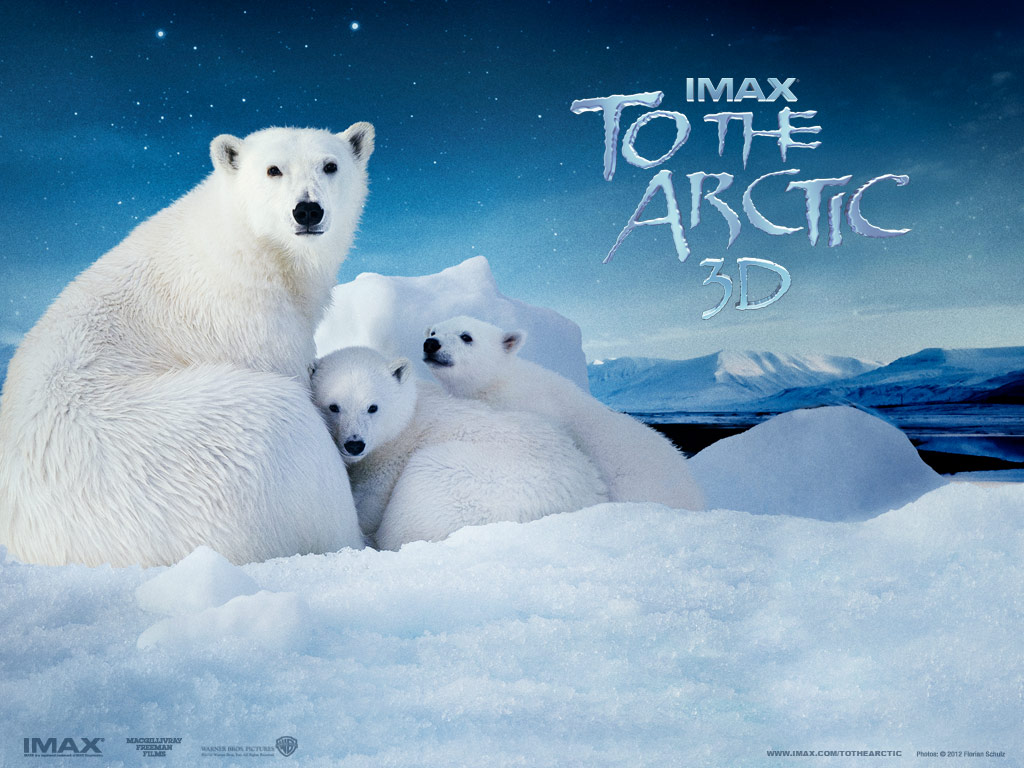 Arctic Fun at Moody Gardens: To The Arctic 3D