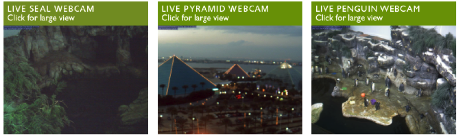 Moody Gardens Offers Live Webcams!