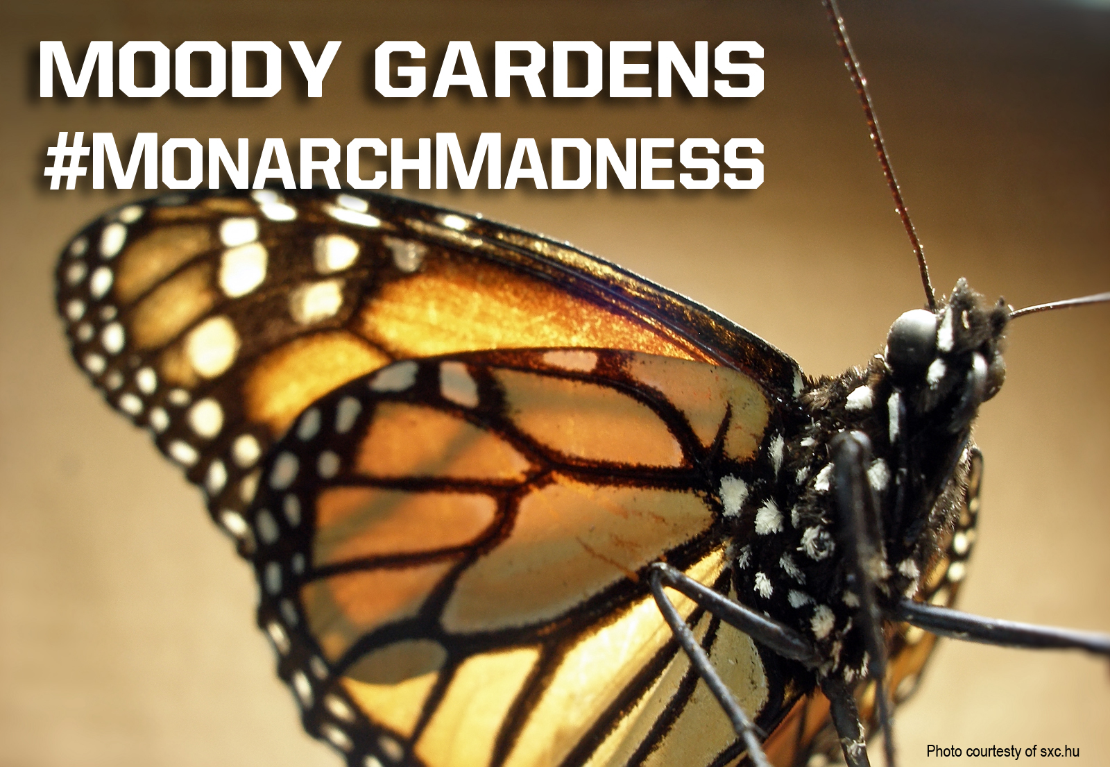 Monarch Madness at Moody Gardens!
