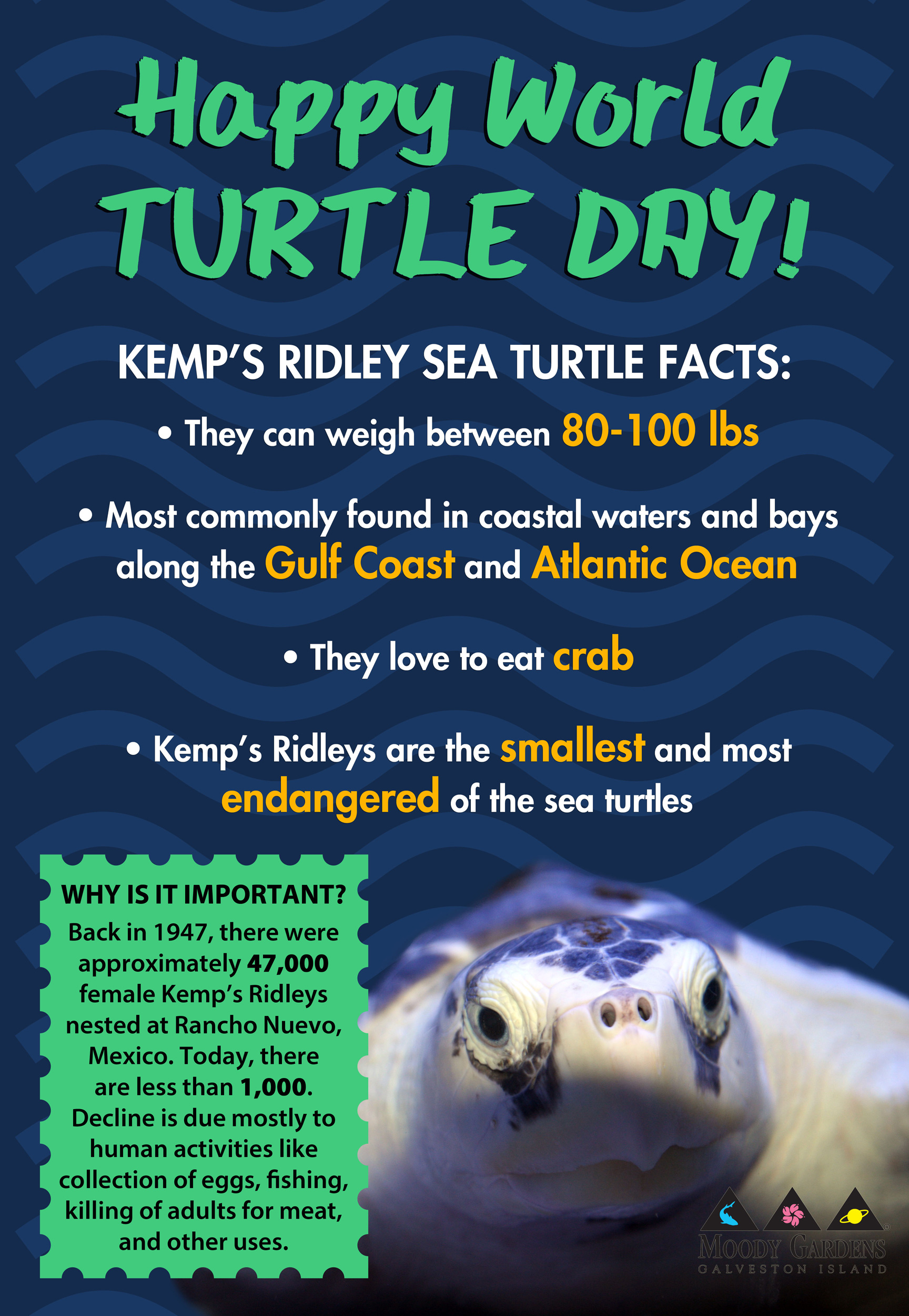 Happy World Turtle Day: Meet the Kemp's Ridley Sea Turtle