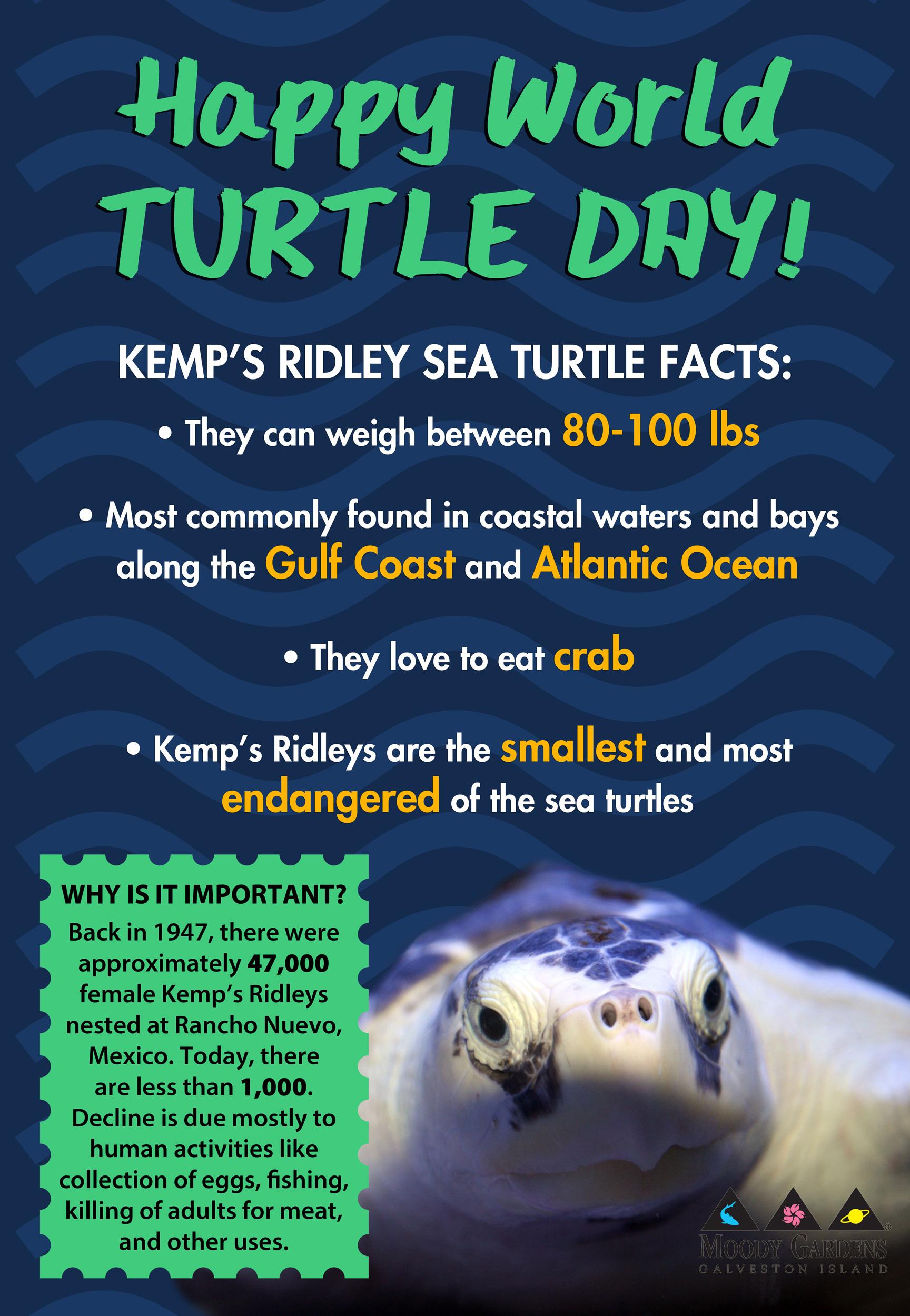 Happy World Turtle Day: Meet the Kemp's Ridley Sea Turtle