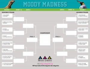 CLICK to download the 2014 Moody Madness Bracket