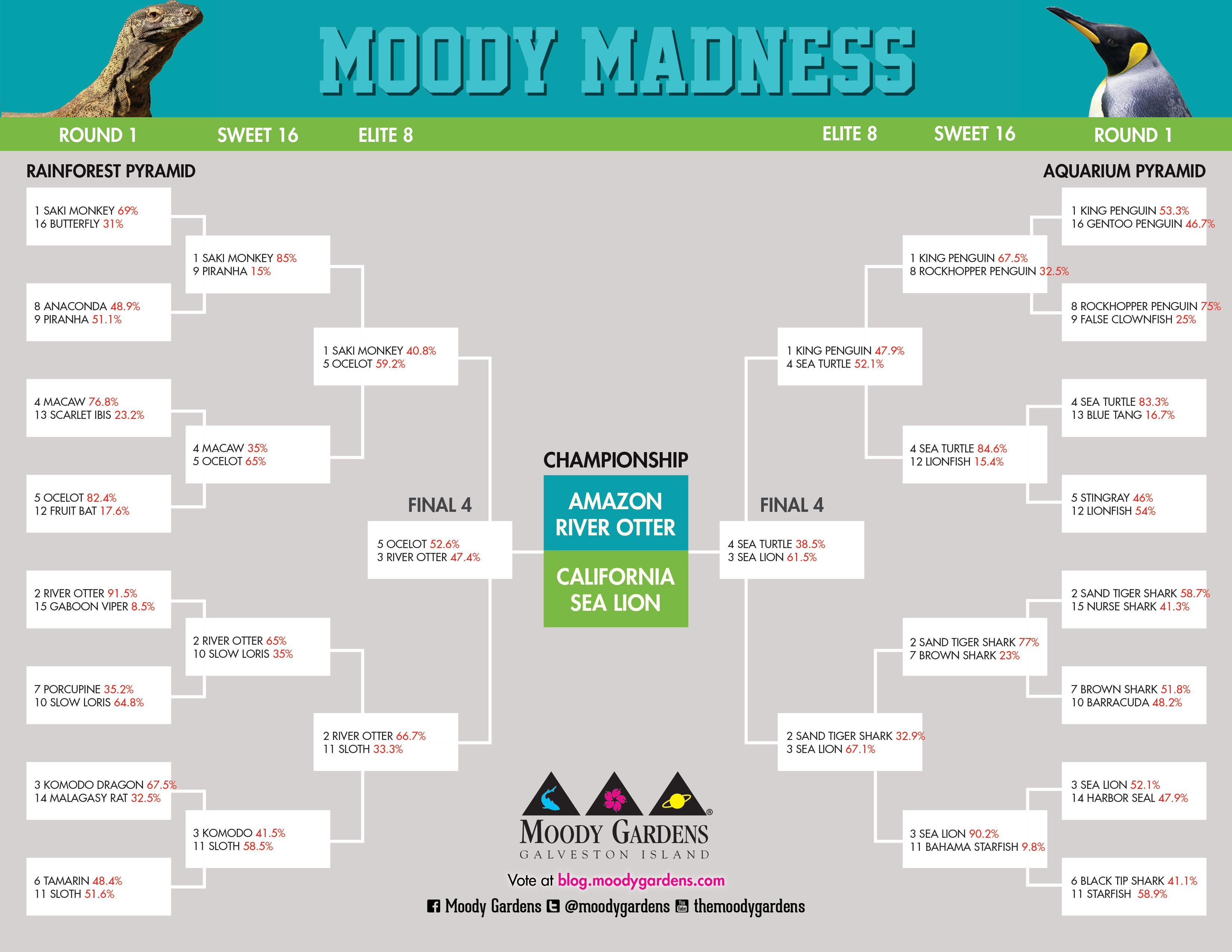 Moody Madness: CHAMPIONSHIP