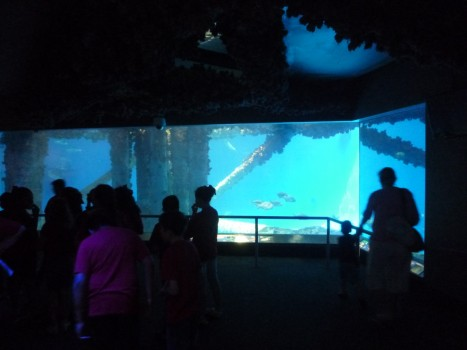 Visitors enjoying the newly added exhibit fish at Texas State Aquarium.