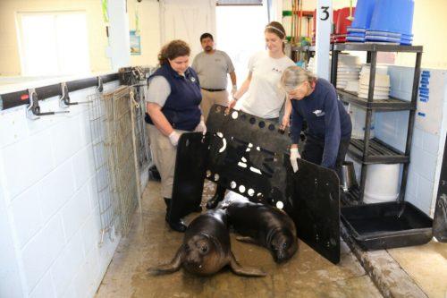 shifting elephant seals
