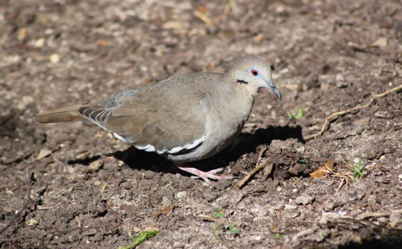 The Birds of Moody Gardens – Spring is in the air